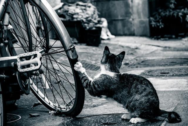 おかしいぞ!自転車のタイヤに空気入らない!パンクか?