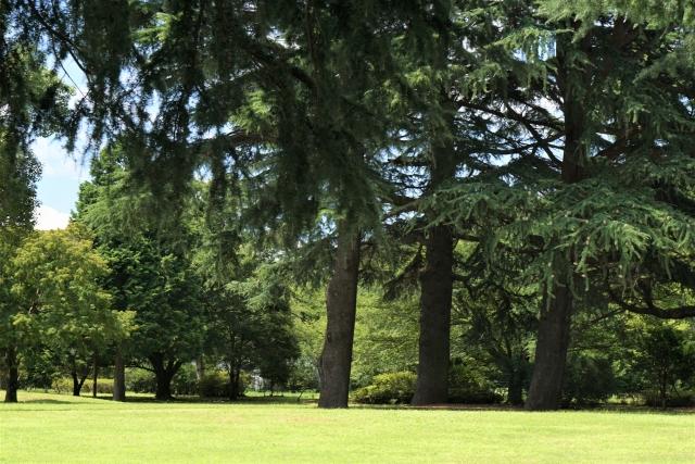 思い出に残る昭和記念公園トライアスロン!ブログを書こう